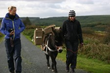 Only girls (the jenny donkey too!)