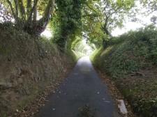 "Jersey – A ""Green Lane"", a little road to walk or bike"