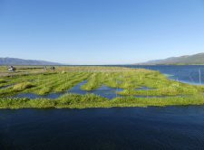 The Floating Garden on Inle Lake
