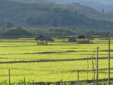 Paddy fields near the town of Kentung