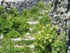 One of the many shepherd trails in Tinos