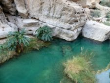 A wadi, a welcome water point