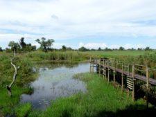 Northern Okavango Delta fishing and observation lodge