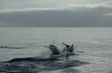 A couple of dolphins leaving us