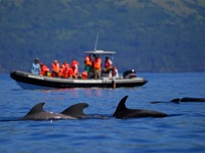Plenty of other animals can be seen: here a pod of pilot whales