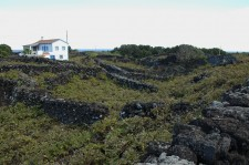 Typical vineyard landscape, registered as a World Heritage Site