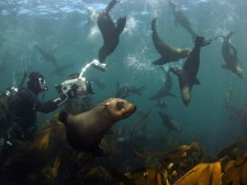 Spending time with sea lions