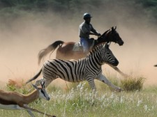 Galloping with zebras and antelopes