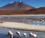 Bolivia - Salt lake - Pink flamingos