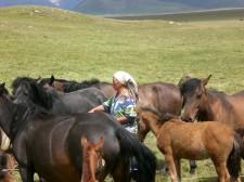 Herding of horses