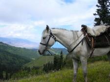 A kyrgyz horse with local saddle