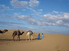 Camel trek in the dunes