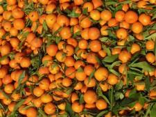 Mandarin shop in the souk