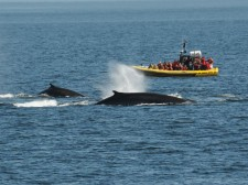 Whale-watching in the Saguenay marine park