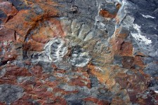 An ammonite in the valley of fossils (Argentina)