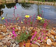 An example of the flora of the region, next to the pond at the gîte