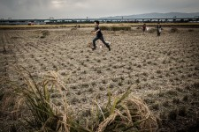 Children playing in a freshly harvested field