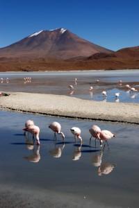 Flamingos, lagoons & volcanos