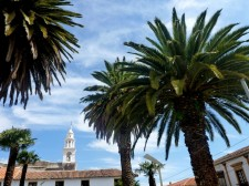 Colonial Towns Extension– Resplendent palm trees in Sucre