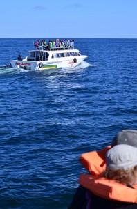 In transit on Lake Titicaca