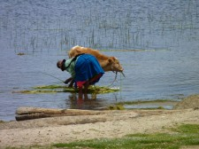 "A ""cholita"" on the shore of Lake Titicaca"