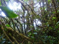 Mountain Tropical Forest Extension– In the jungle