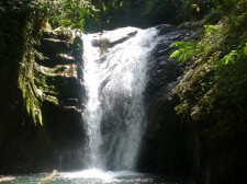 Mountain Tropical Forest Extension – A waterfall in the jungle