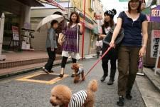 A stroll in Tokyo