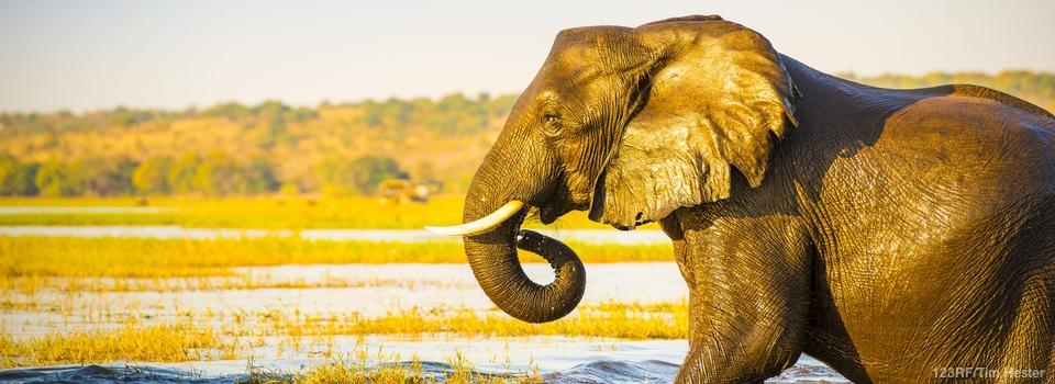 Botswana – Okavango Delta to Victoria Falls