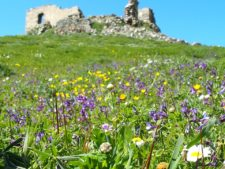 A flowery meadow on the slopes of Exombourgo