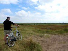 Les dunes couvertes de bruyère dans le parc national de Texel