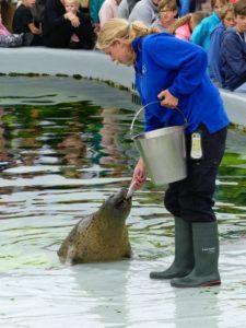 C'est l'heure du repas au refuge pour animaux marins Ecomare